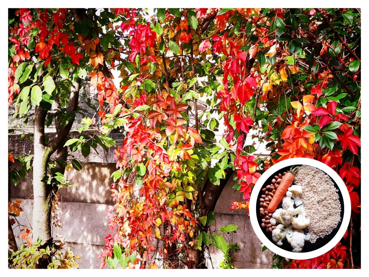 Pancreas, Milza, Stomaco. L'autunno e l'Energia Terra. La cura degli organi stagione per stagione.